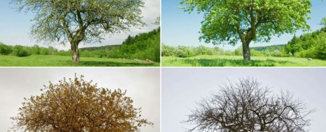 Tree in 4 different seasons
